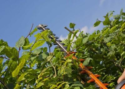 hampshire-hedges-01_130-2rev