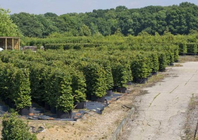 hampshire-hedges-01_141rev