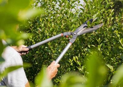 hampshire-hedges-01_150rev