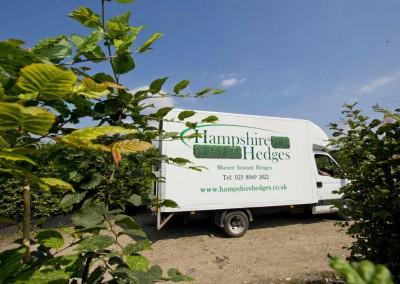 hampshire-hedges-01_6rev