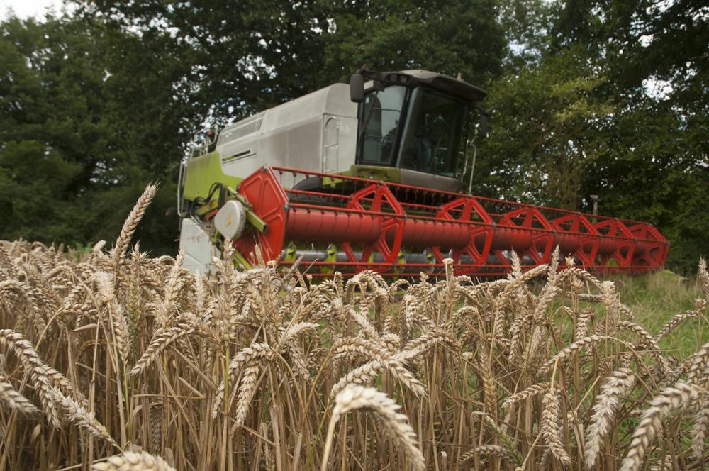 Hampshire Grain