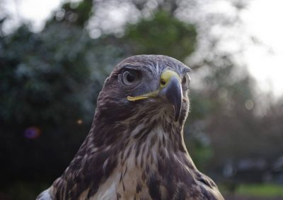 close up head of bird of prey